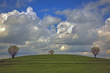Three Trees & Clouds, Clinton State Park